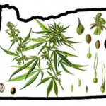 Oregon Medical Marijuana Laws