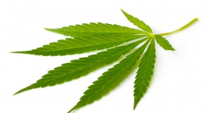 What is Sativa Marijuana