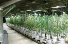 30 Interesting Facts About Marijuana
