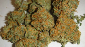 Top 9 Marijuana Stories of 2012