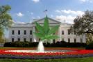 Marijuana Becomes Legalized In Washington, D.C Tonight at Midnight