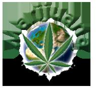 Marijuana World News