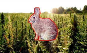 DEA Warns of Stoned Rabbits in Utah