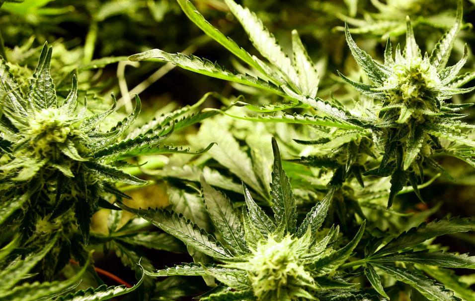 Marijuana World News – 20 Conditions Added to Illinois Medical Marijuana Bill