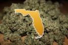 Judge Clears Path for Medical Marijuana in Florida