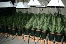 Marijuana Proven to Help Control Epileptic Seizures