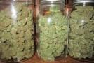 Marijuana Proven to Relieve Arthritis Discomfort