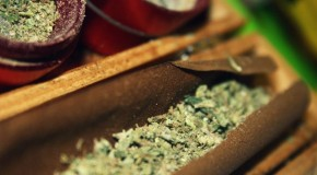 10 Funny Facts About Cannabis