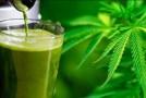 Crazy Health Benefits of Juicing Raw Cannabis