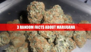3 Random Facts About Marijuana You Probably Didn't Know