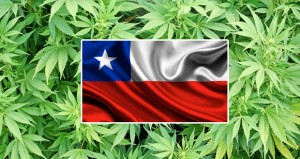 Chile Approves Historic Marijuana Decriminalization Bill