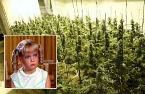 Cindy Brady From The Brady Bunch Admits To Illegally Growing Weed
