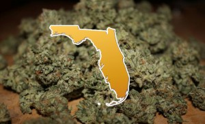 Judge Clears Path for Medical Marijuana in Florida
