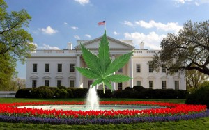 Marijuana Becomes Legalized In Washington, D.C Tonight at Midnight