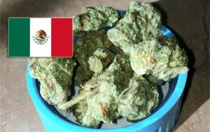 Mexico President Pena Nieto Proposes Relaxed Marijuana Laws
