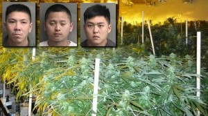 Police Discover Marijuana Factory Worth $15 Million