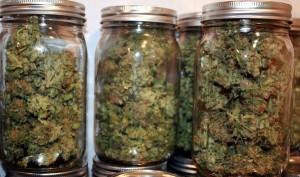 Historic Medical Marijuana Bill Gaining Serious Momentum