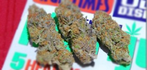 Strain Of The Day: Fruit Loops